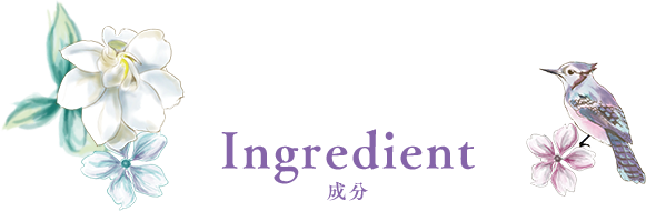 Ingredient成分